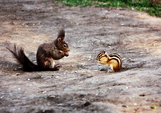 哈尔滨太阳岛升级生态景观 近千只松鼠迎游人